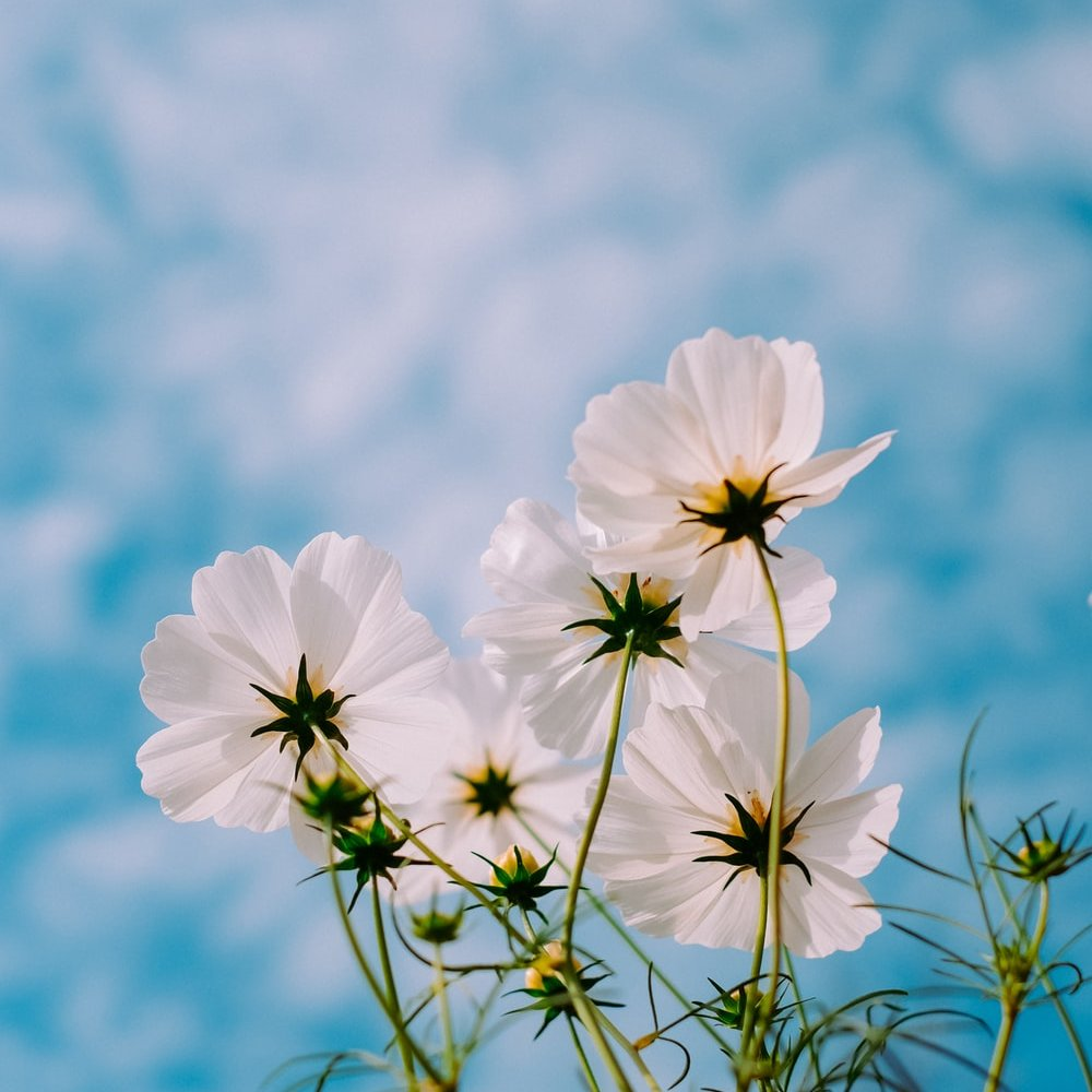 white-colour-significance-flower